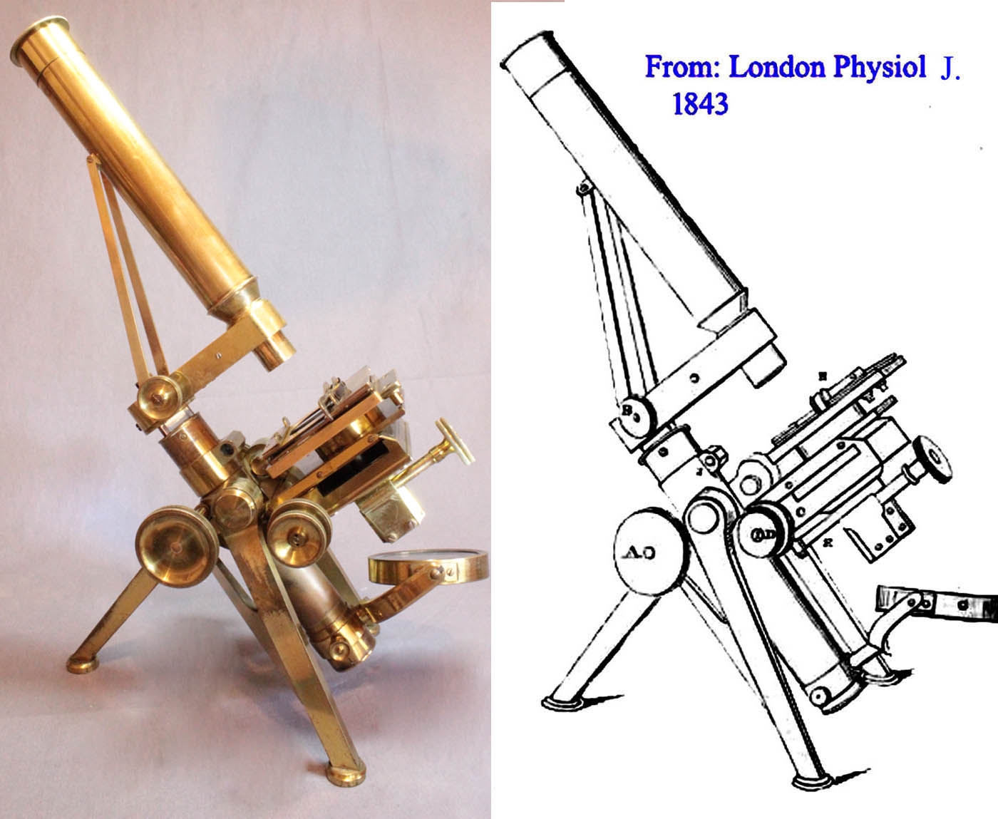 P and L microscope